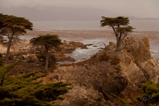the-lone-cyprus_monterey-bay_tg